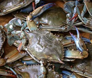 Trollinger Law LLC Sponsors Blue Crabs and Blue Prints to Benefit Frederick County Habitat for Humanity